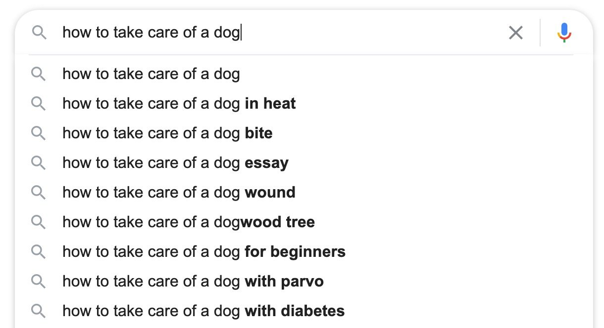 how to take care of a dog google search suggested queries